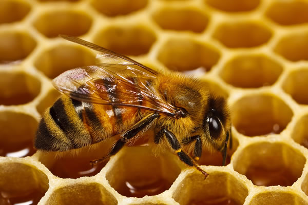 manuka honey kills all bacteria