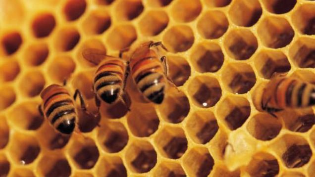 Honey kills good bacteria