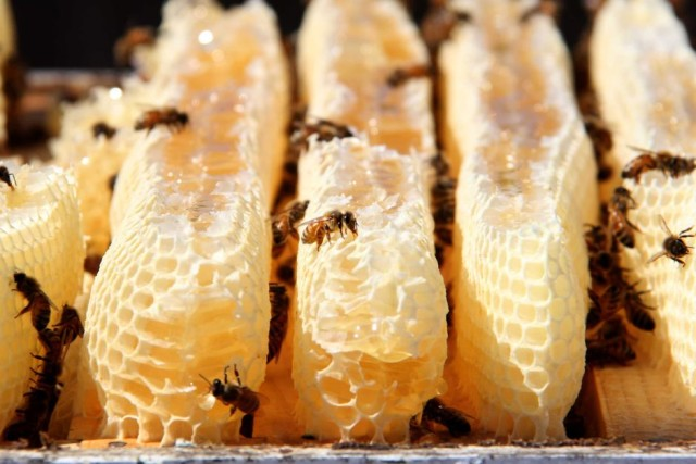 Manuka Honey Used To Heal A Recalcitrant Surgical Wound