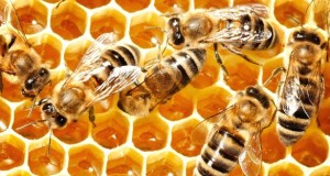 How To Take Manuka Honey Daily